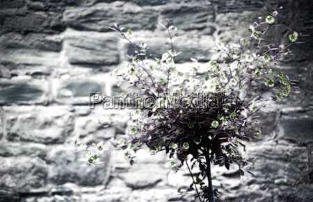 shrub against wall close up