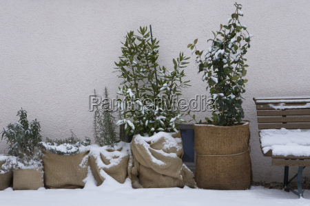 cold weather protection for plants