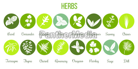 big set of flat culinary herbs