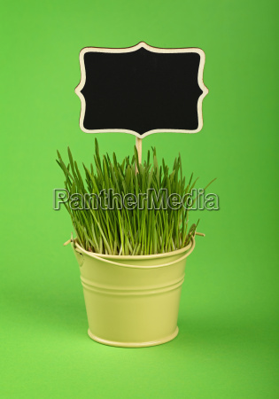 spring grass with black sign in