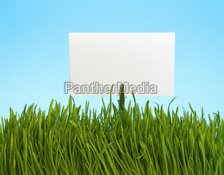 white paper sign in green grass