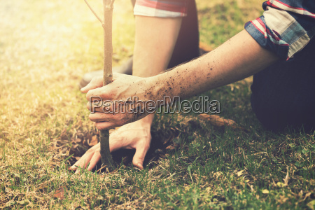 gardener planting a tree while working