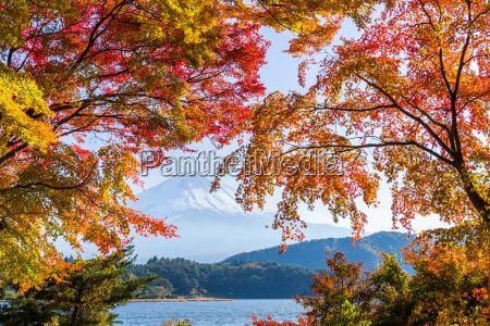 mount fuji in autumn season of