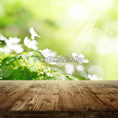 spring background with flowers and wooden
