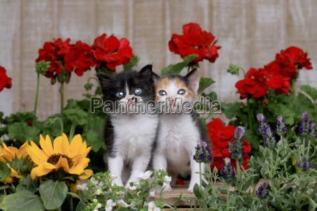 cute 3 week old baby kittens