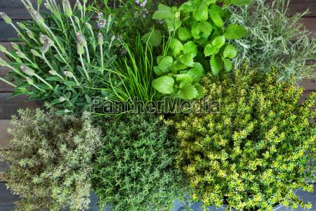 fresh mediterranean spice herbs
