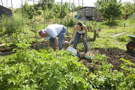 family gardening together in community garden