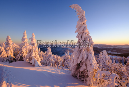 germany bavaria bavarian forest in winter