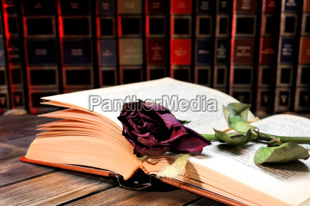 red rose wilted through the pages