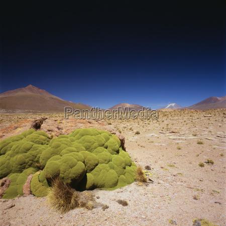 idyllic shot of desert landscape against