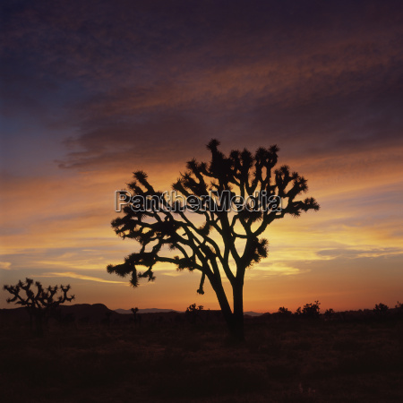 silhouette of tree in landscape against