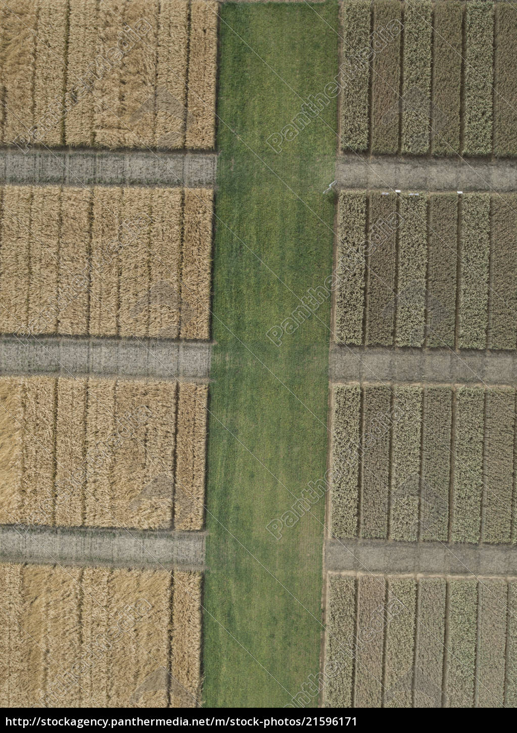 full, frame, aerial, view, of, crops - 21596171
