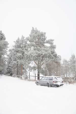 idyllic view of snow covered trees