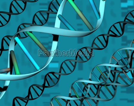genetic material in the cell