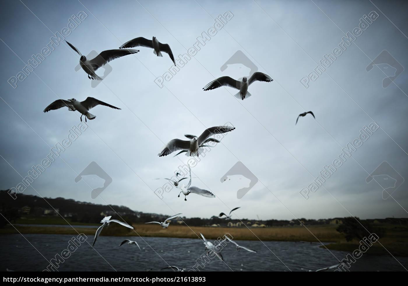 flock, of, seagulls, flying, near, lake - 21613893