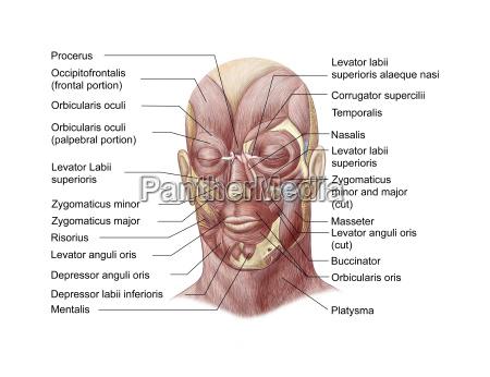 medizinisches medizinischer medizinische medizinisch illustration veranschaulichung