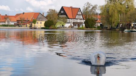 fish pond in ilsenburg