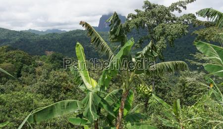 rainforest sao tome africa