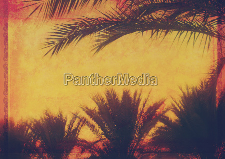 grunge tropical background with coconut palm