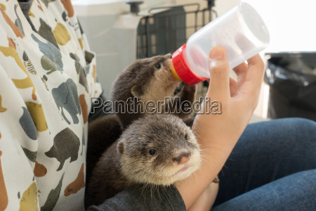 zookeeper feeding baby otter