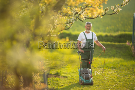 senior man mowing the lawn in