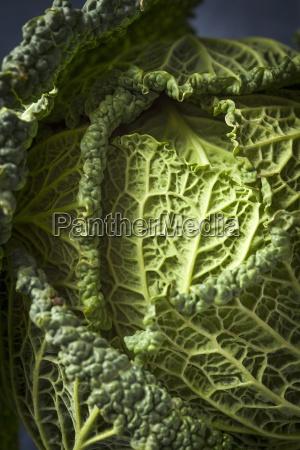 savoy cabbage close up