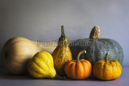 selection of pumpkins on a grey