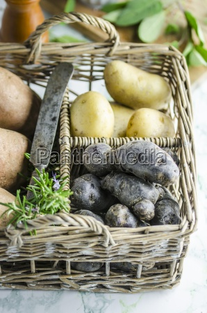 various types of potato in a
