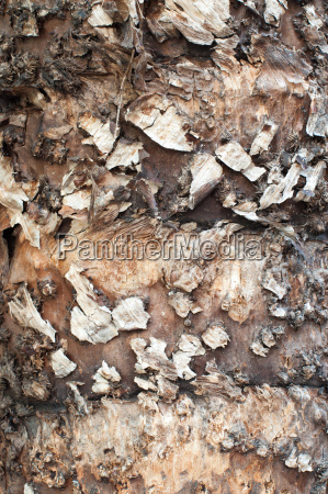 palm tree trunk surface