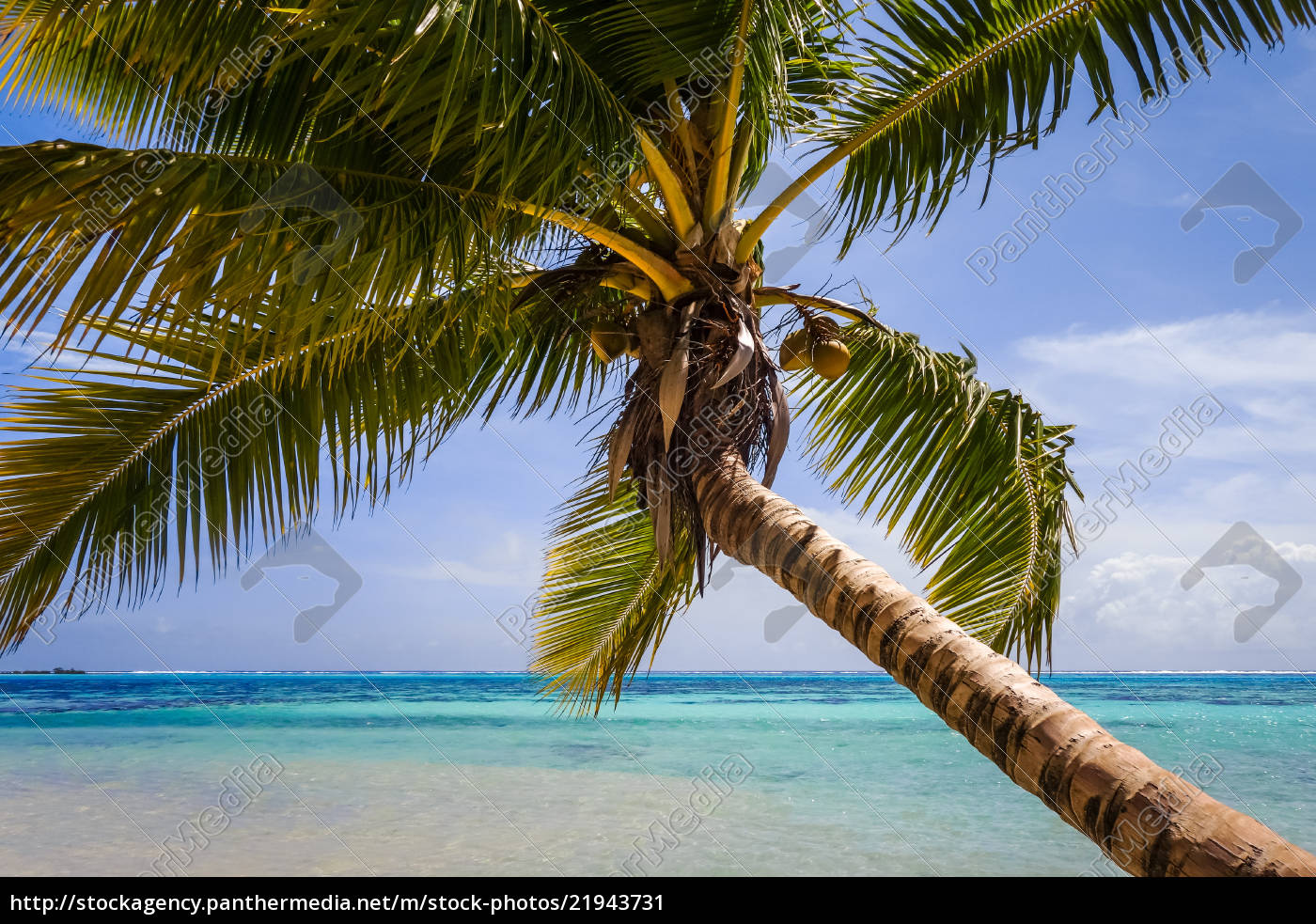 Royalty Free Image 21943731 Paradise Tropical Beach And Lagoon In Moorea Island