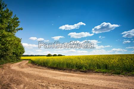 dirt road in flowering field beautiful