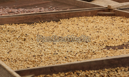 drying of cocoa and coffee beans