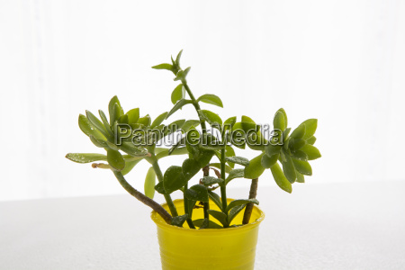 decorative home plants and flowers