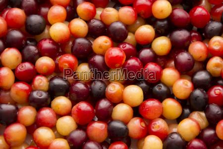 wild cherry fruit organic cherries