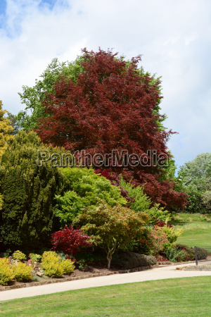 lush green and red foliage of