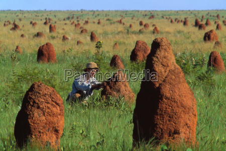 researcher examining termite mounds emas national