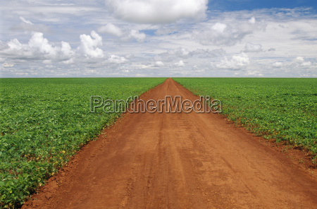 dirt road through soy bean fields