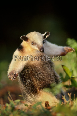 pantanal is a wetland with an