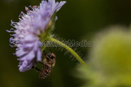 pollen collectors