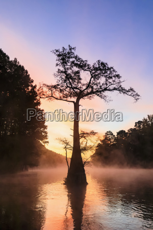 usa texas louisiana caddo lake big
