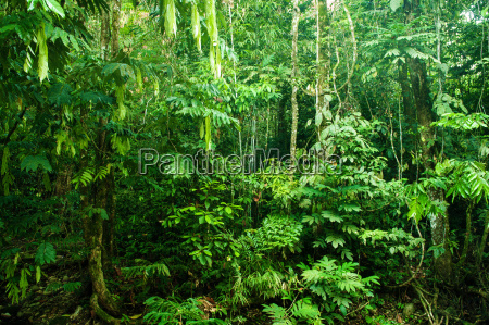 incredible tropical dense forest