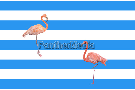 flamingos maritime in front of blue