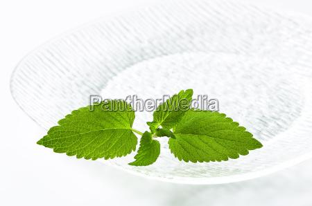 fresh mint leaves on plate