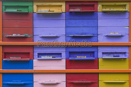 bees love colorful