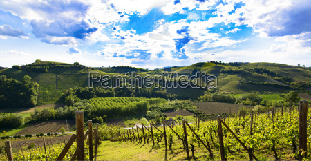 view of the vineyards and hills