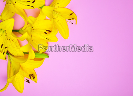 bouquet of flowering yellow lilies