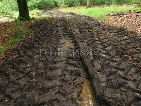 damaged forest floor after harvestereinsatz