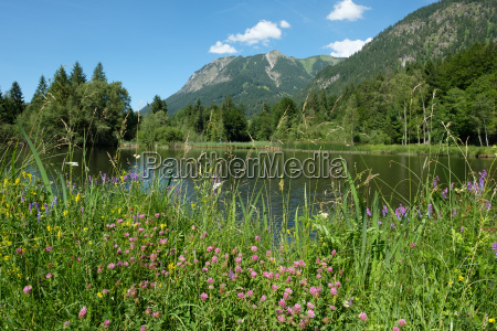 pond with flowers and flowers in