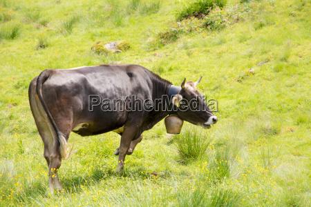 agricola animal mamifero agricultura campo biologico