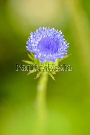 beautiful macro blue flower